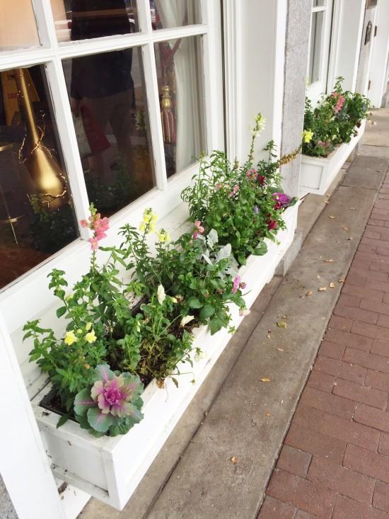 Flower box in January in Savannah, GA